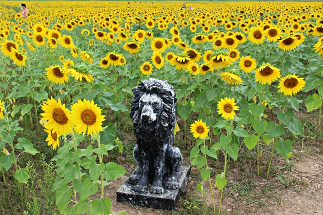 The Sunflower Maze included a scavenger hunt!